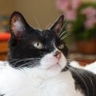 『愛猫ソラの行動からソラの心を考える』の画像