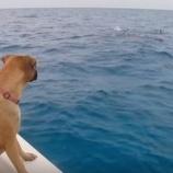 『生まれて初めてイルカを見た犬サンディちゃん』の画像