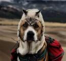 犬と猫ってガチで戦争したら猫の方が強いよな。