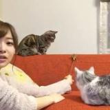 【SHOWROOM】指原莉乃が2匹の猫と共演www