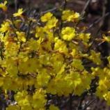 『3月の花悪用植物園)②』の画像