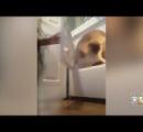 洗濯乾燥機に犬を入れて回した少女の動画に非難殺到:地元警察や動物保護センターが調査に乗り出す