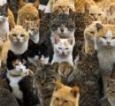 【画像】ネコがひしめく日本の島が世界で話題に