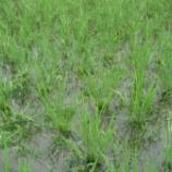『田んぼの掃除は大変です』の画像