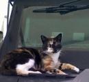 【画像】ボストン市警SWATチーム、猫の行方を追う