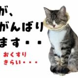 『きょうのいちまい・猫も花粉症になるんですって』の画像