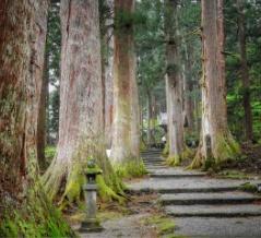 【富山】立山信仰の伝統が息づく杉林 芦峅雄山神社