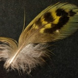 『世界で最も発見困難な鳥の羽』の画像