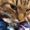 彼氏面して松井玲奈さんの横で寝てる男子・・・