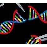 【悲報】ゲノム編集食品、年内にも食卓へ…www