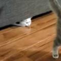 子ネコが床で遊んでいた。もう1匹はソファの下に隠れる → すると…