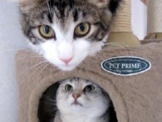 キャットタワーを解体し始めたら猫が・・・