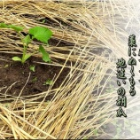 『今年の草刈りやいかに?』の画像