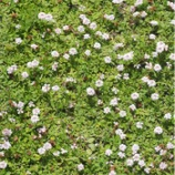 『【庭造り】グランドカバーで雑草対策!!』の画像