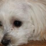 『犬猫殺処分室の無い保護センター新設』の画像
