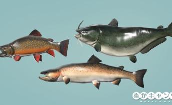 アパラチアの魚