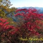 『四国 寒風山の秋』の画像