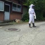 『本日もアシナガバチ駆除依頼が』の画像