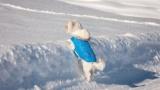 昔ワイ「はぁ…犬に服着せるとか人間のエゴやろ」 ペットショップ「キュゥン…」