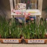 『千葉県の新型コロナ情報【2021年5月30日】ワクチン接種が進むシンガポール❗』の画像