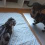 猫の表情から北海道も暑いことが伝わるかな?
