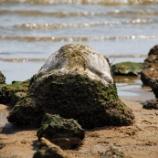 『甲子園浜に広がる遺構を探索2 [歴史は海底に眠る]』の画像