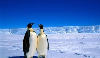 南極大陸の氷、「実は増加していた」 NASA