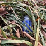 『イルミネーションの中にも空き缶ゴミ(T_T) 後谷公園・市役所南通り定期清掃活動でした』の画像