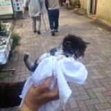 十条仲通り商店街産子猫の里親募集!の写真