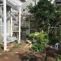 *まずは基本のお世話から・・庭パト、液肥、花がら摘み、雑草etc