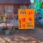 『秋だ!!芋掘りだ!!穴場の芋堀出来る所』の画像