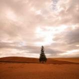 『【北海道ひとり旅】上川の旅『クリスマスツリーの木』薄日が差す夕暮れ時』の画像