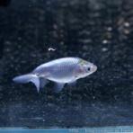 ハムオの金魚&パキポ日記
