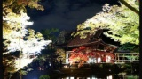 親父「もしもし、京都行こう」俺「え?仕事だよ無理だよ」親父「そうか」