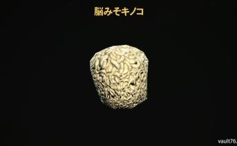 脳みそキノコ(Brain fungus)