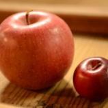『ただ今「奇跡のりんご」で仕込中』の画像