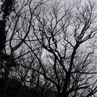 『まだ続く冬』の画像