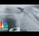 サメをボートで引きずり殺し笑いながら動画撮影 怒ったサメ漁師が拡散
