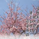 『遅れ咲き』の画像