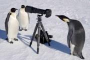 ペンギンの「はぇ~」感は異常