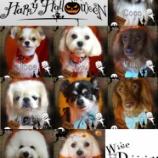 『2013-9-24のわんちゃん達』の画像