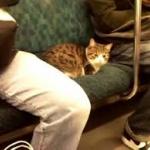 電車で妊婦に席譲らないやつってなんなの?