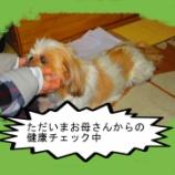 『犬と食材』の画像