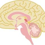『【記憶の入れ替え】人間の脳にはニセの記憶を埋めこめることができる』の画像