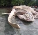 海岸に打ち上げられた15メートルの謎の巨大生物の死骸 専門家も混乱しイカかクジラかで論争