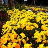 『戸田公園駅東口が花の香りに包まれています』の画像