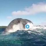 『波の音、海の声 ♡ #クジラ』の画像