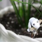 『おうちの花たち~デジイチ登場』の画像