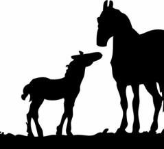 「馬の獣医をしているけど、今日はこんな幸せが訪れた!」