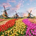 オランダ「性別も名前も変えられるなら年齢も変えられるだろ、20歳若くしてくれ」